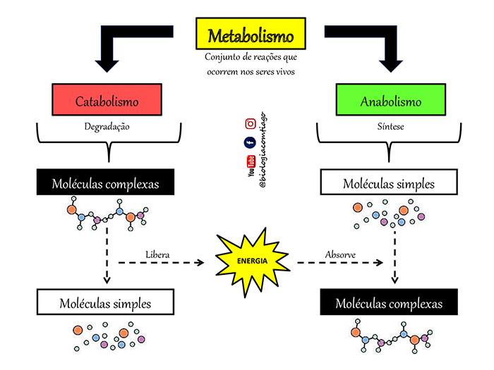 fases metabólicas: anabolismo e catabolismo