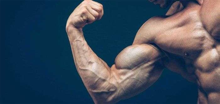 entenda o que é hipertrofia muscular e qual seu significo para podermos gerar mais ganhos