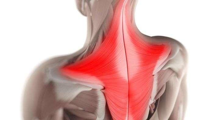 anatomia do músculo trapézio