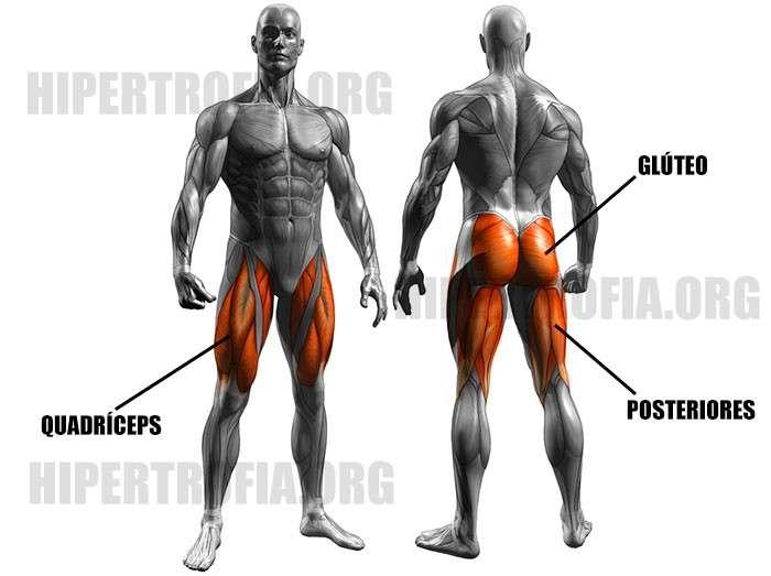 músculos trabalhados durante o exercício leg press 45 graus