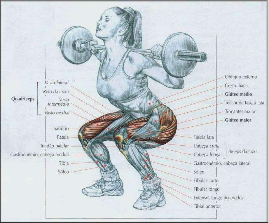 imagem mostrando quais músculos são recrutados durante o agachamento livre com barra