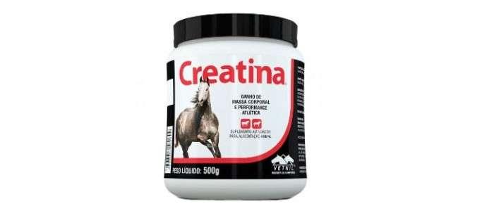 vale a pena usar creatina de cavalo para hipertrofia