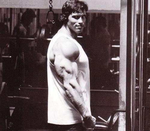 treino de tríceps para atingir as três cabeças do músculo