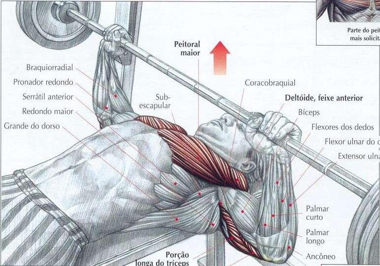 músculos trabalhados durante o supino