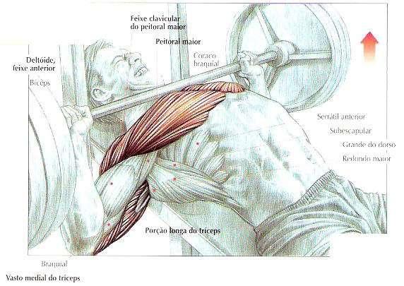 músculos trabalhados durante o supino inclinado com barra