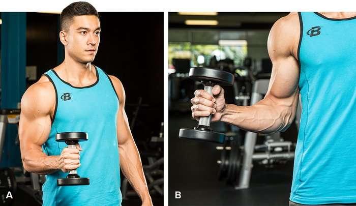 fortalecimento do manguito rotador para evitar dores no ombro ao fazer supino usando rotação externa dos braços com halteres