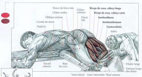 Mesa flexora - execução correta, músculos trabalhados e