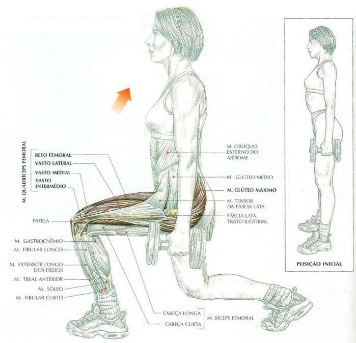 músculos envolvidos durante o exercício afundo