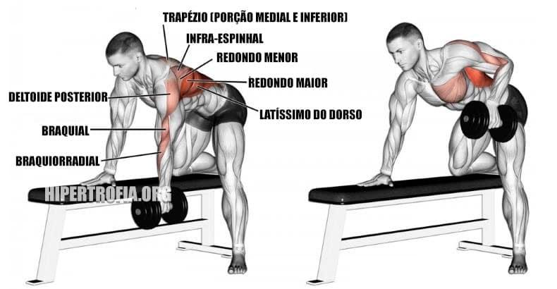 músculos envolvidos durante a remada unilateral