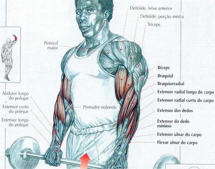músculos requisitados durante a rosca inversa