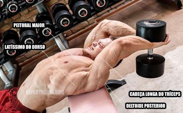 principais músculos envolvidos durante o exercício pullover com halteres
