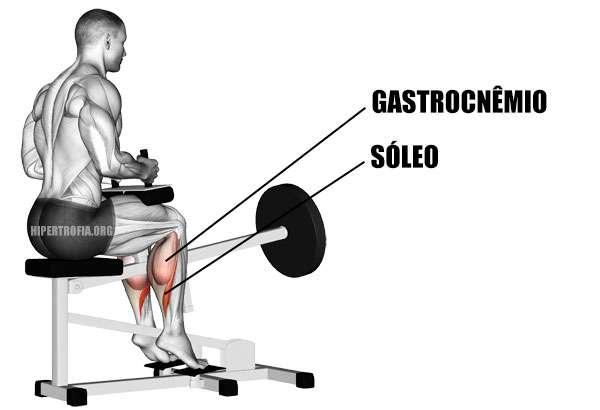 Músculos envolvidos durante a elevação de gêmeos sentado