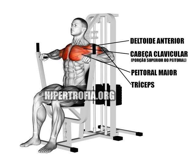 Músculos envolvidos durante o supino vertical na máquina