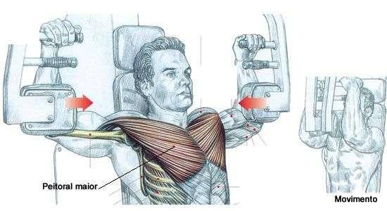 músculos recrutados durante o voador