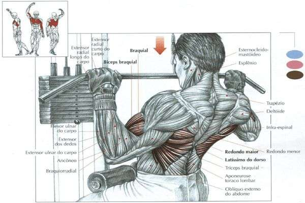 músculos recrutados durante o pulley frente