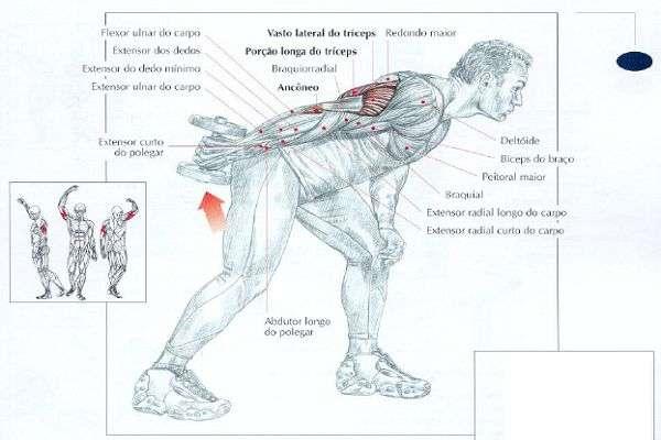 Músculos envolvidos durante o exercício tríceps coice
