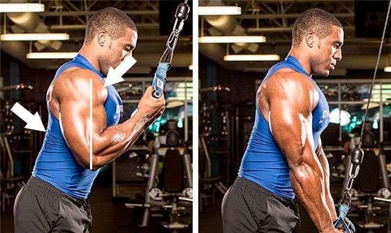 curvando o tronco durante o triceps invertido