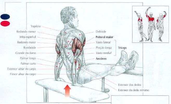 músculos trabalhados durante o mergulho no banco
