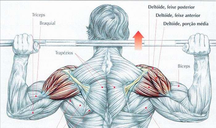 Músculos envolvidos durante o desenvolvimento nuca com barra