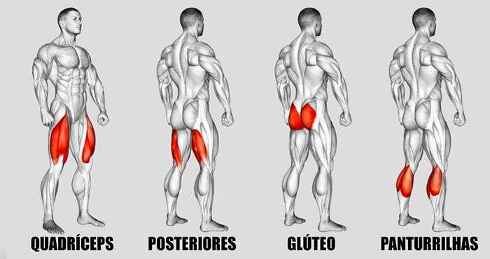Principais músculos envolvidos no treino de pernas feminino