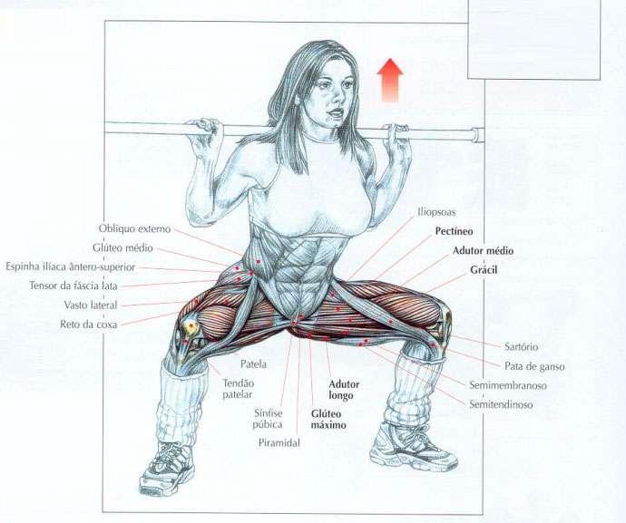 músculos usados durante o agachamento sumô