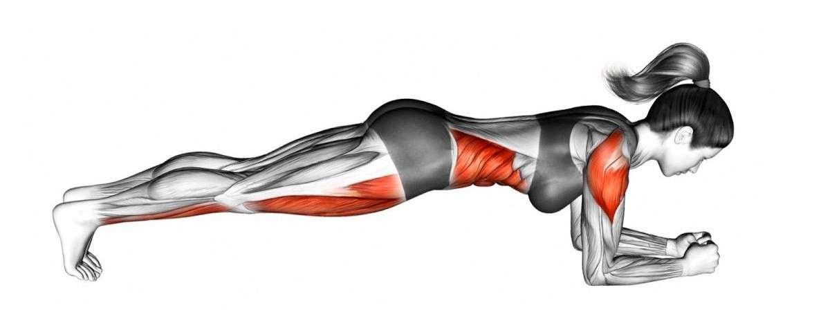 músculos involucrados durante el tablero