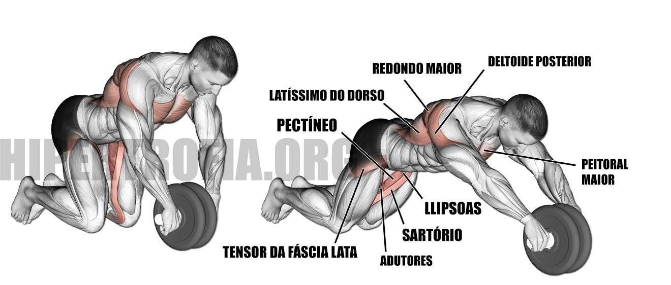 músculos trabalhados durante a roda abdominal para abdômen