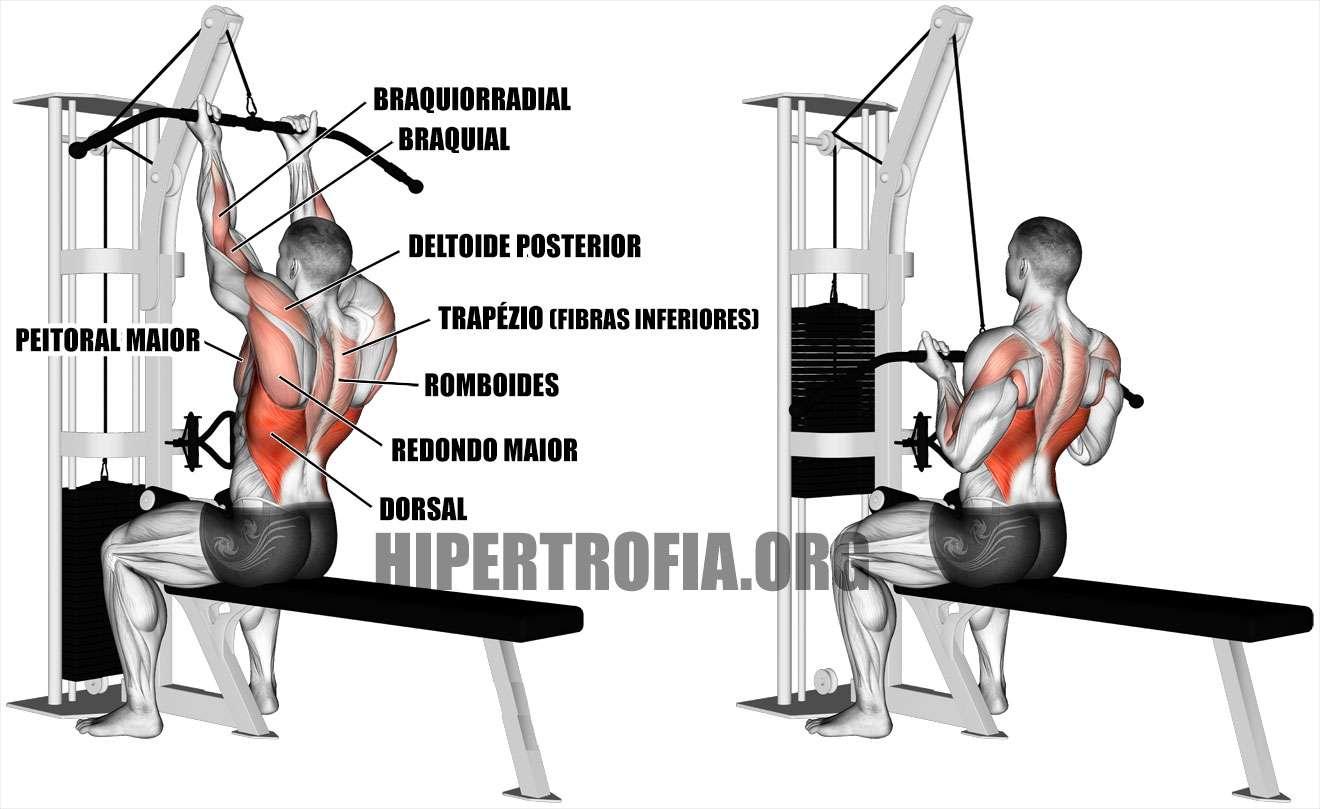 quais músculos são trabalhados durante a puxada supinada