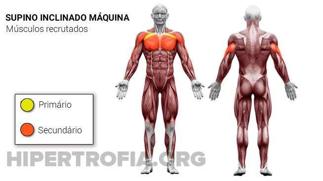 músculos recrutados durante o supino inclinado articulador (na máquina)