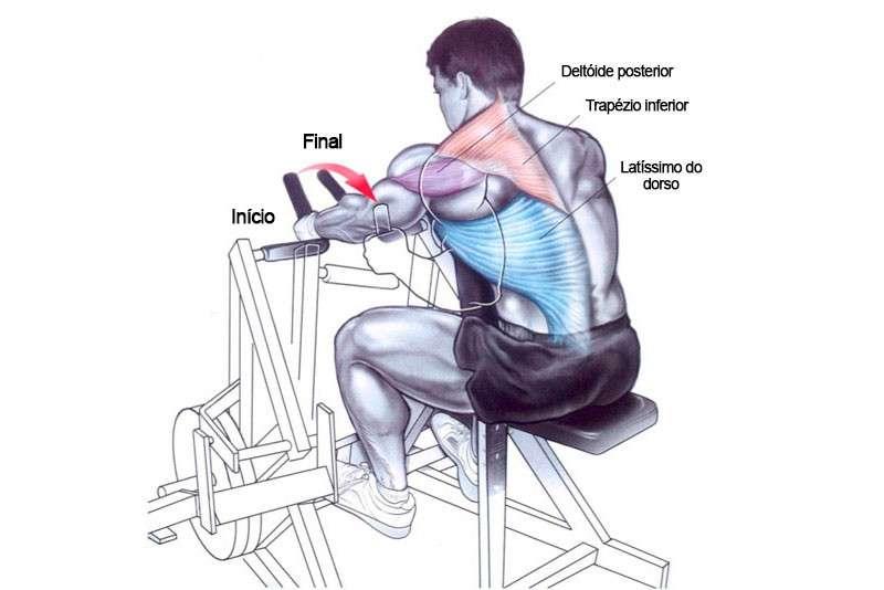 musculos recrutados