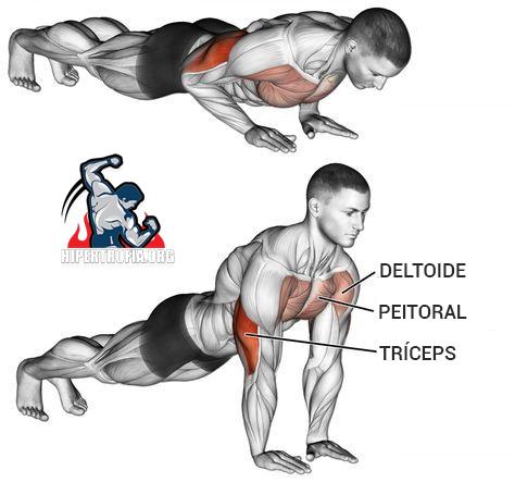músculos reclutados en flexión de diamante